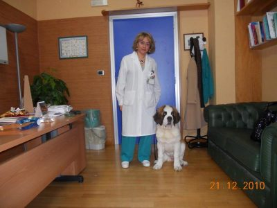 pet therapy san bernardo